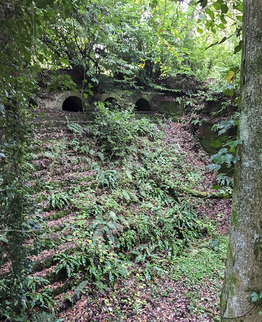 Woodland Steps.  Ashdown, 15 October 2017.