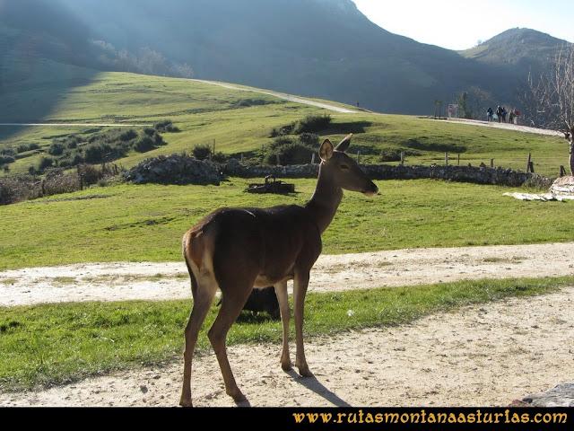 Ruta de las Foces del Rio Pendón y Varallonga: Bambi en Les Praeres
