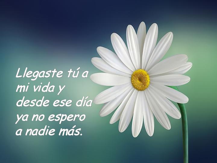 Frases Cartelitos Para Face Frases De Amor Llegaste Tu A