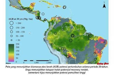 Hutan Hujan Baru Tumbuh Menyerap Lebih Banyak Karbon