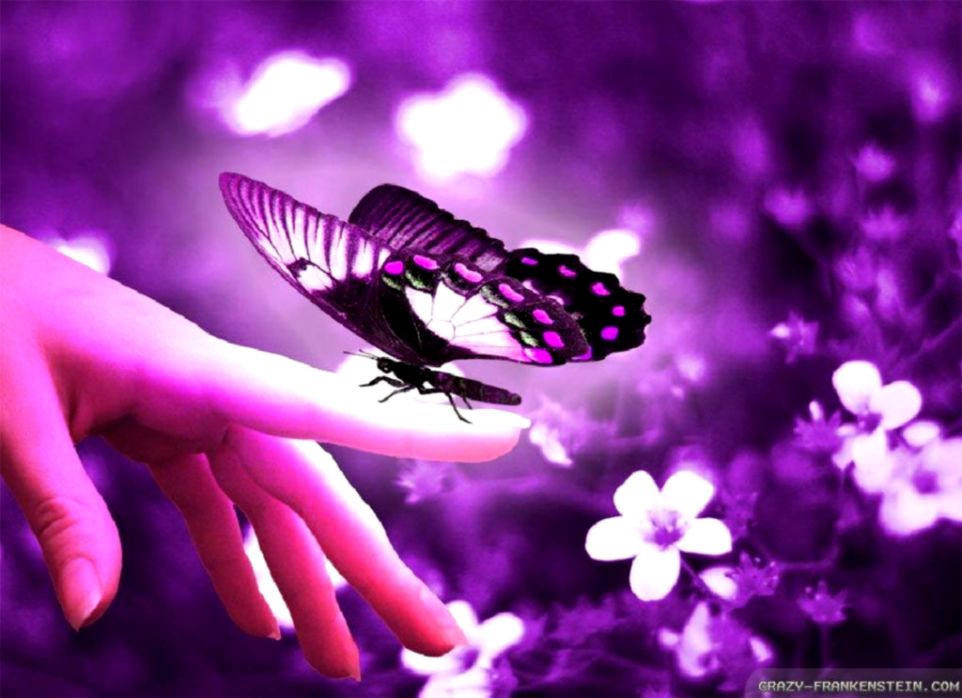 Beautiful Butterfly Wallpapers Wallpapers Names