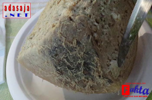 Casu Marzu makanan keju belatung yang sangat menjijikan dari italia