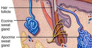 Hiperhidrosis, Penyebab Keluarnya Keringat Berlebih