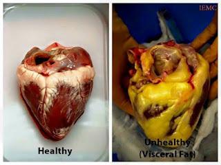 lemak diorgan