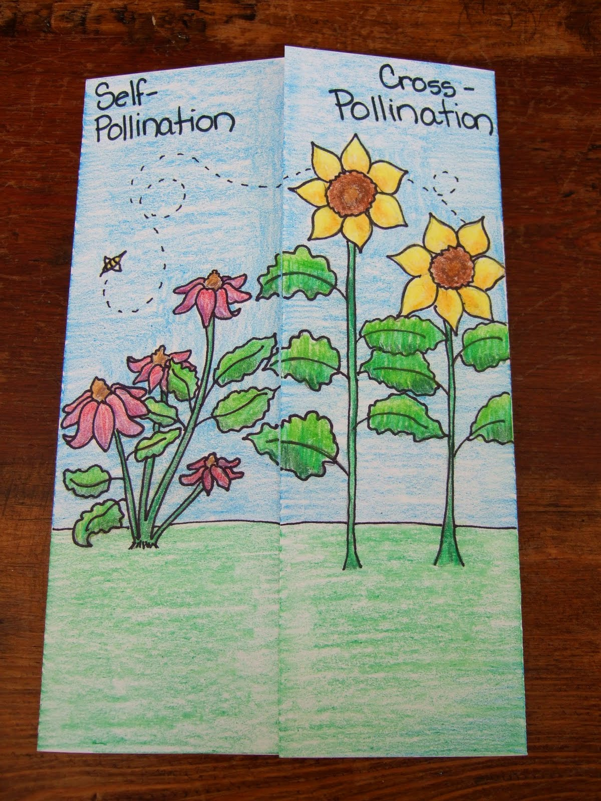 The Inspired Classroom Cross Pollination Amp Self Pollination