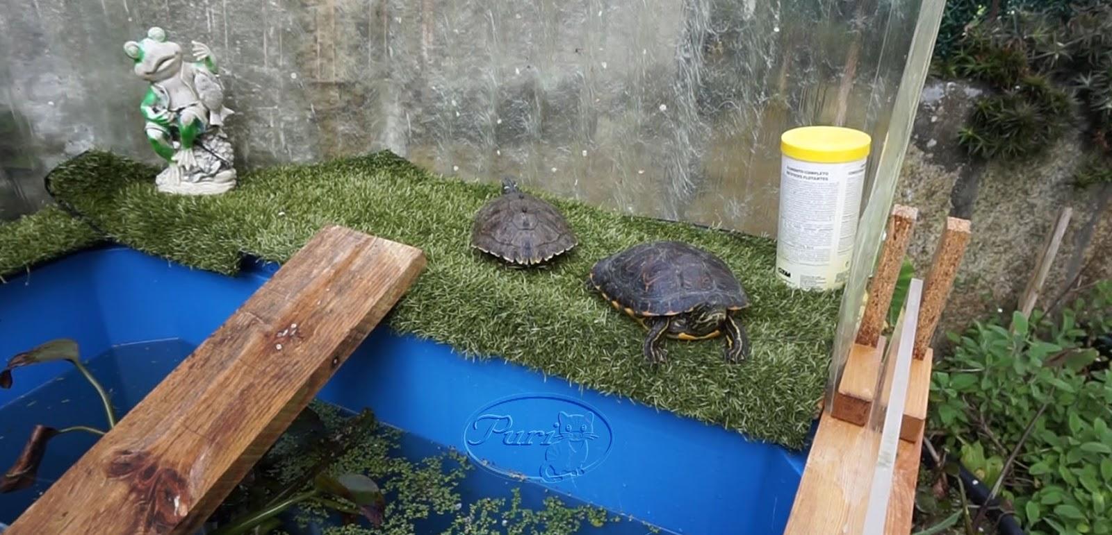 Mi jardin y mi huerto hacer un estanque de tortugas - Como construir un estanque para tortugas ...
