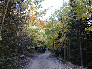 Fall day on a mountain road with fall leaves hanging over the road.