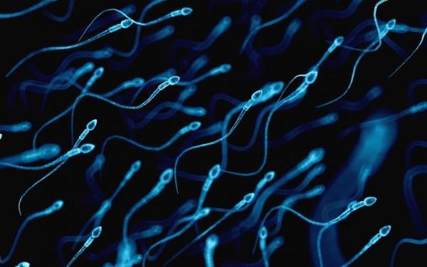 Produção do esperma pode ser afetada pela ingestão exagerada de alimentos gordurosos e açúcares