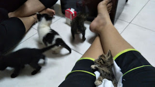Feed Milk for 4 kittens