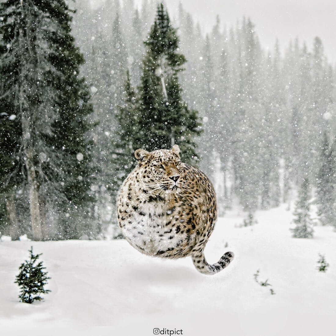 07-Leopard-Aditya-Aryanto-Surreal-Animals-Ball-Photo-Manipulations-www-designstack-co