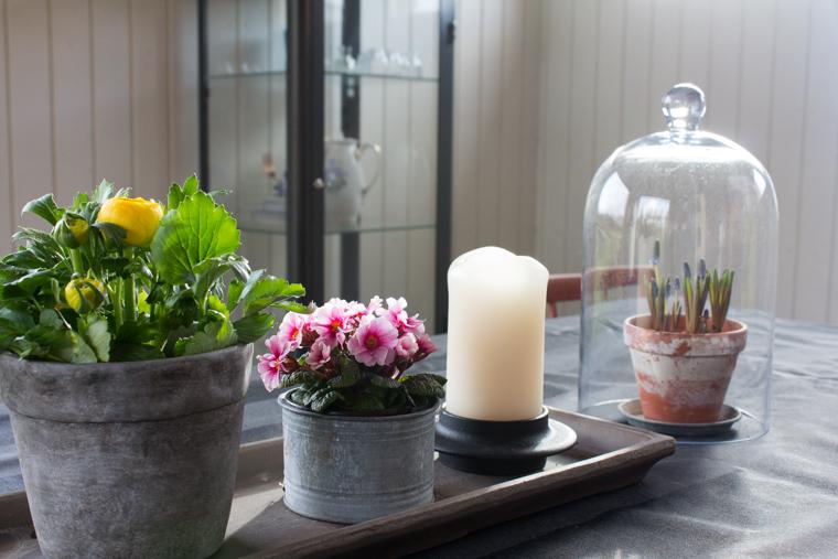 ævlebævle: friske blomster i potter og lidt om hvordan det går med ...