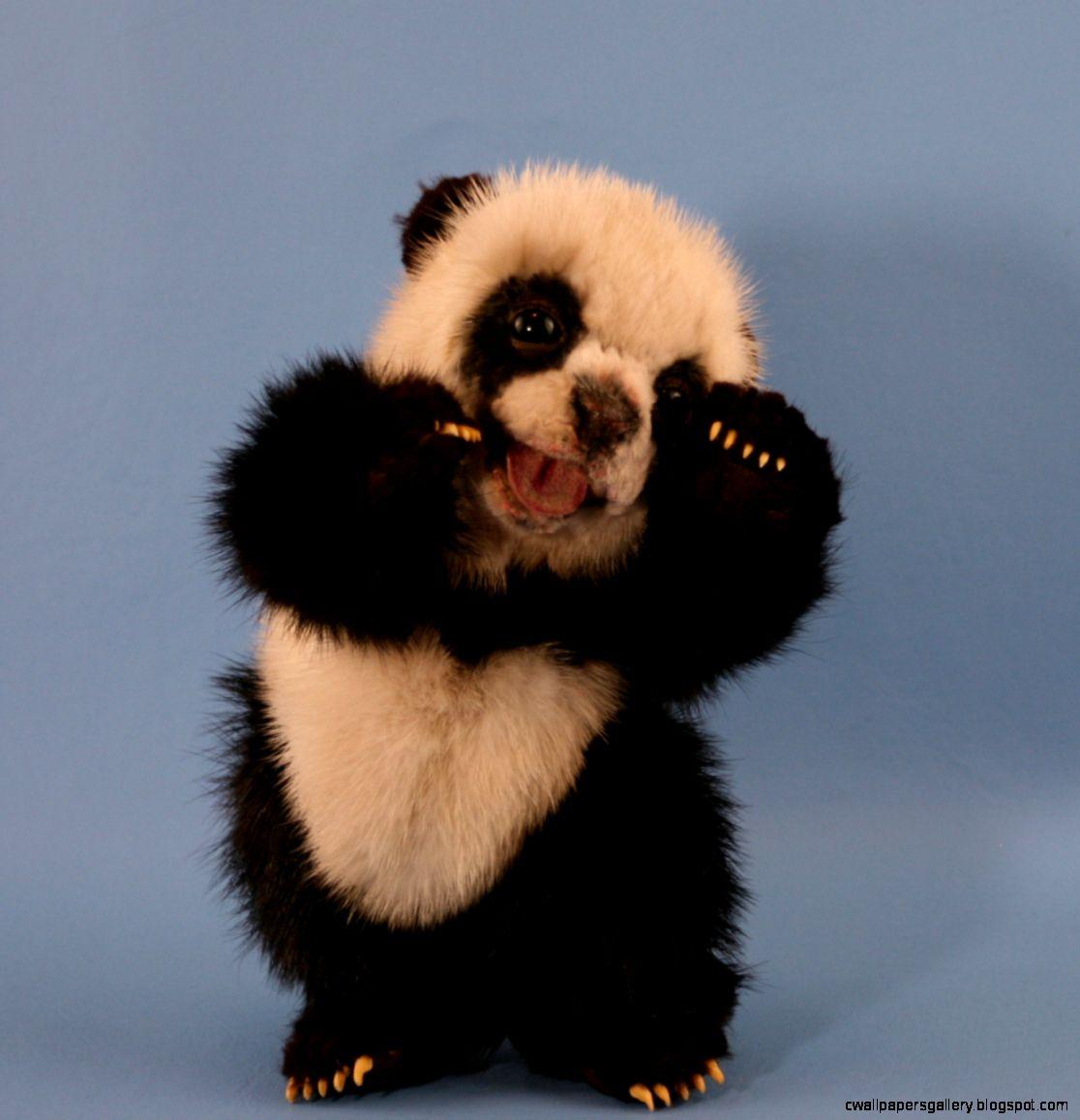 Cute Baby Panda Bears Wallpaper - photo#26