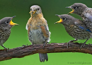 Debunking Atheists, primacy of God, Birdies