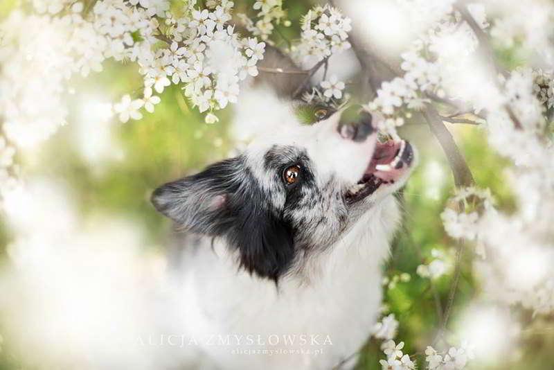 dog-photography-alicja-zmyslowska-11