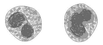 Contoh bentuk sel pada tubuh Mahluk hidup