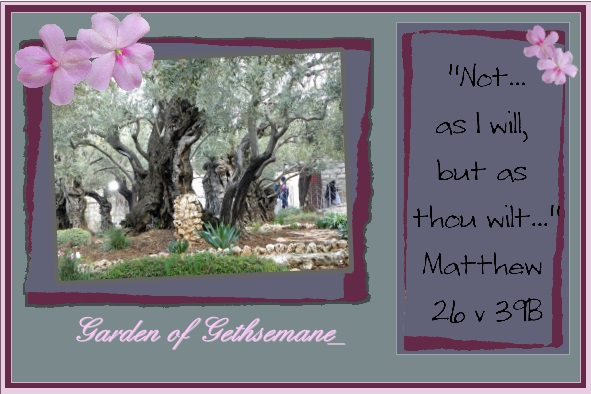 March_2016_-_Garden_of_Gethsemane