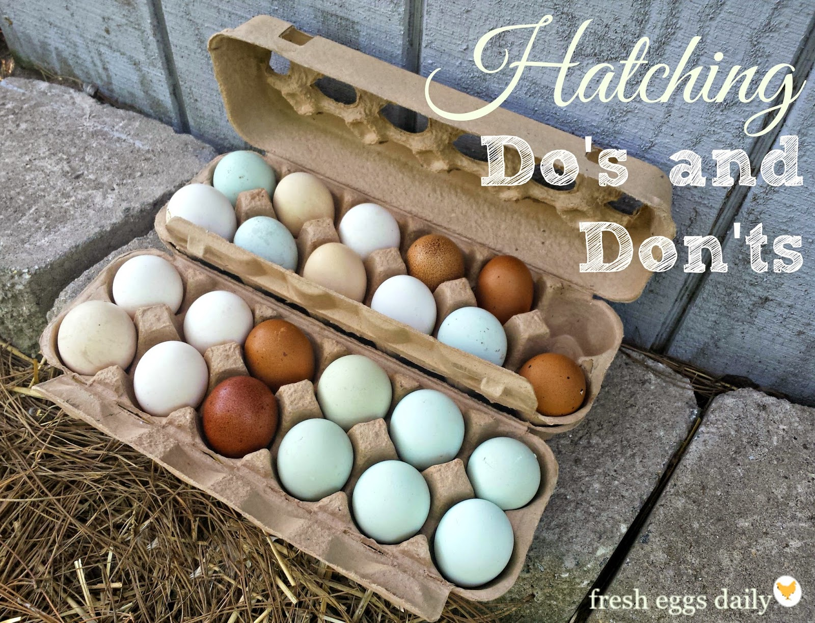 Hatching Do's and Dont's - Egg Selection, Handling and Incubation ...