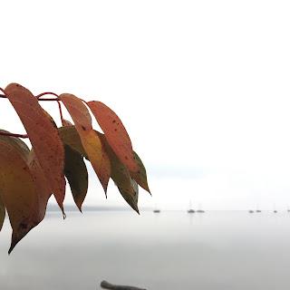Rotes Laub und Segelboote auf dem Ammersee