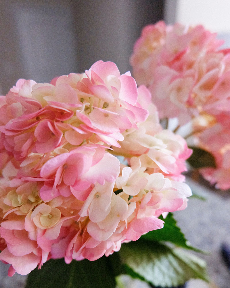 best tip to keep cut hydrangeas from wilting