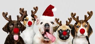a pet as Christmas gift