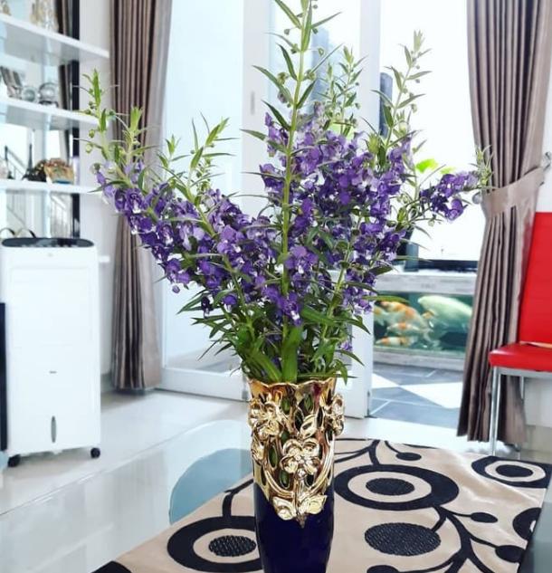 Bunga Lavender Tanaman Hias Dalam Ruangan