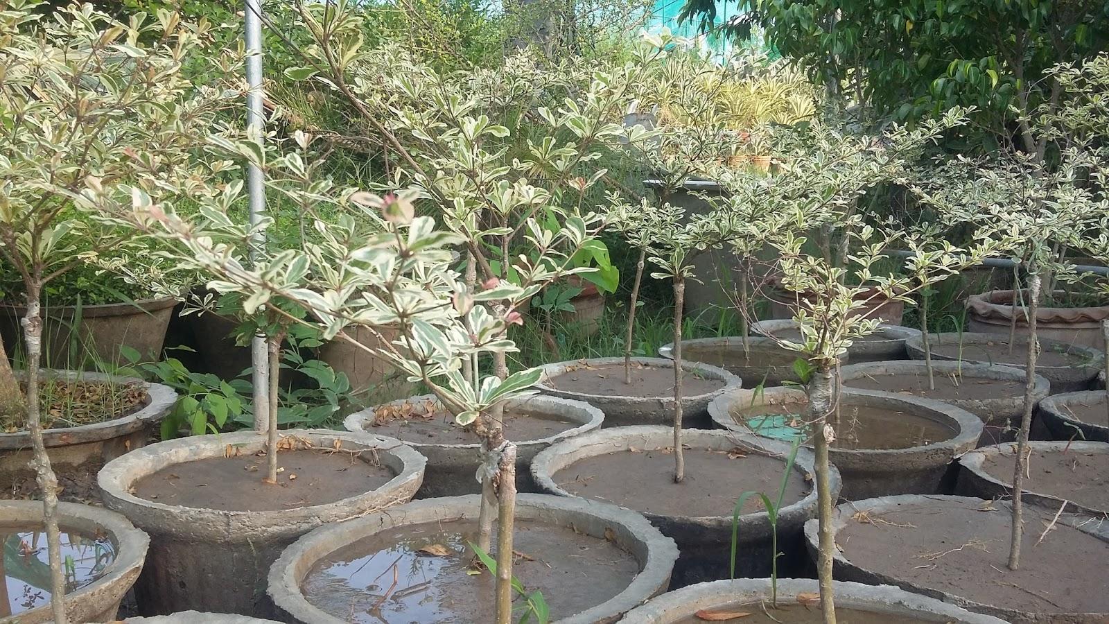 Greenworld Nursery Farm Pattoki