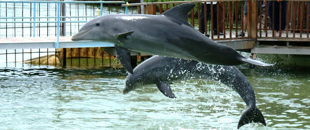Delfines, etologia y biologia