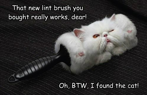 Hilarious Cat Lint Brush Picture Animal Photo