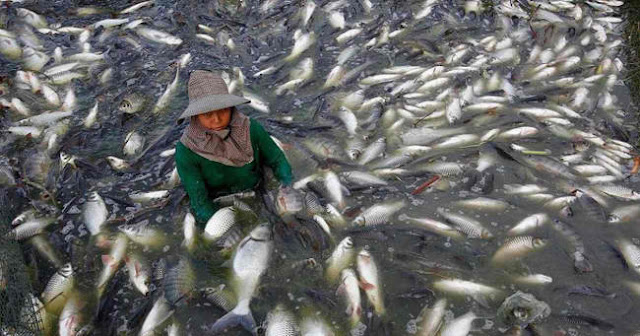 Warning: Tilapia Causes Cancer And Other Deadly Diseases