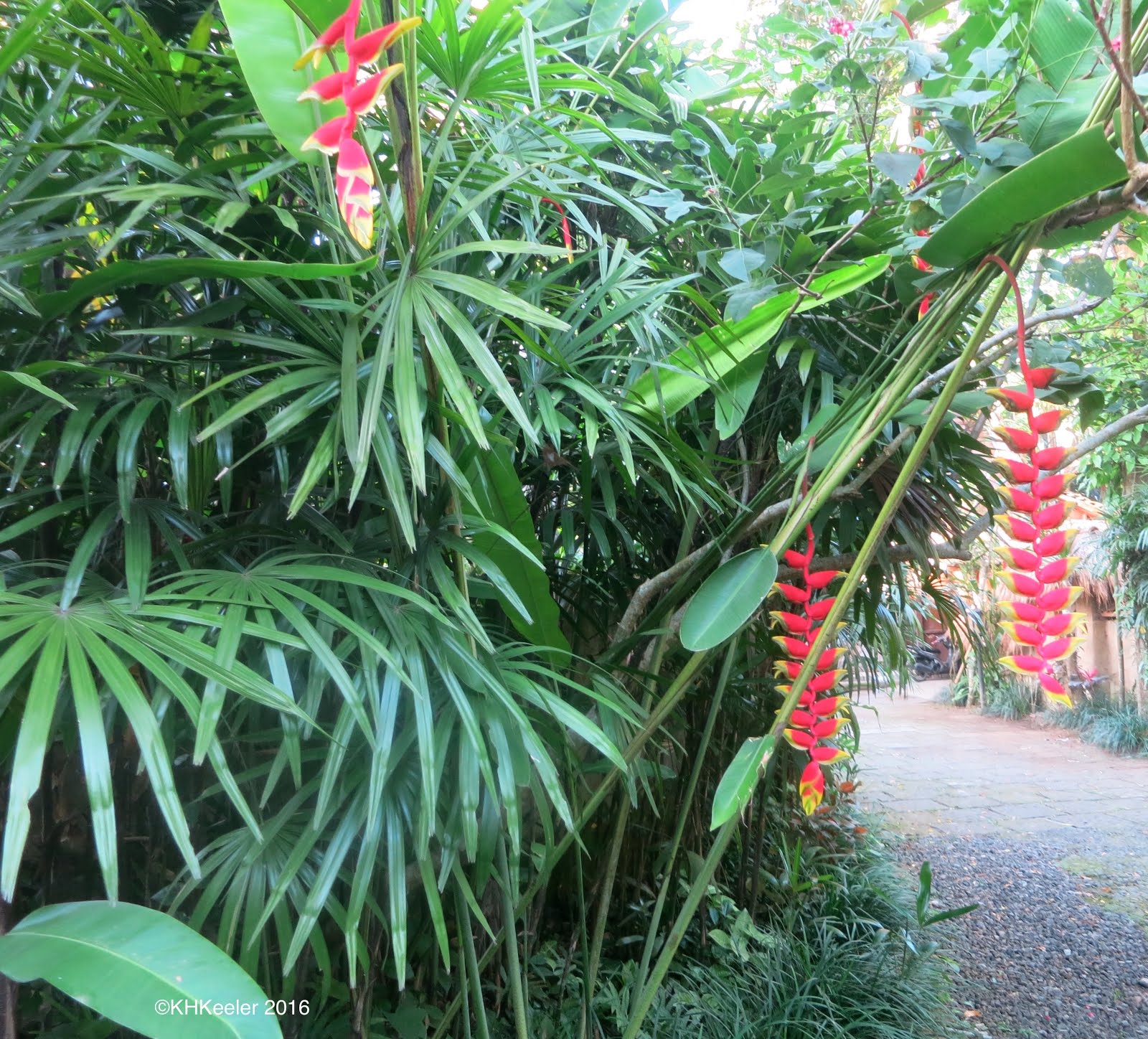38 Glorious Japanese Garden Ideas: A Wandering Botanist