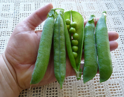 Tall Telephone Peas