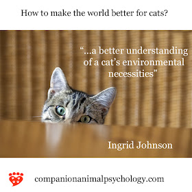 A cat pops its head up. A better understanding of environmental necessities would make the world better for cats