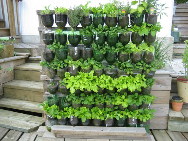 huerto urbano con botellas de plástico recicladas