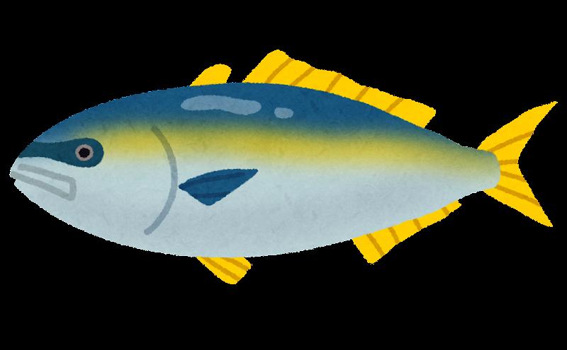 https://3.bp.blogspot.com/-5ccEpI-5qwQ/VvXe5ps8DBI/AAAAAAAA5Jo/S_Kil6RUsCUx_4zZKZYqt2ZYh6w2lBMKw/s800/fish_buri2.png