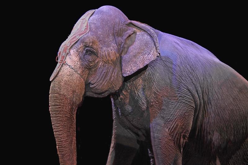 Elefante num circo