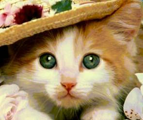القطه المتحيره