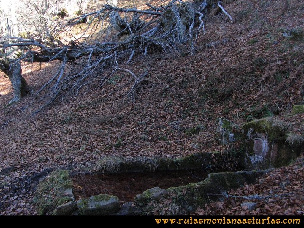 Pico Mosquito desde Tarna: Fuente en el hayedo