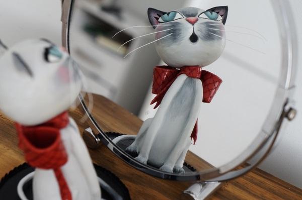 gato de biscuit