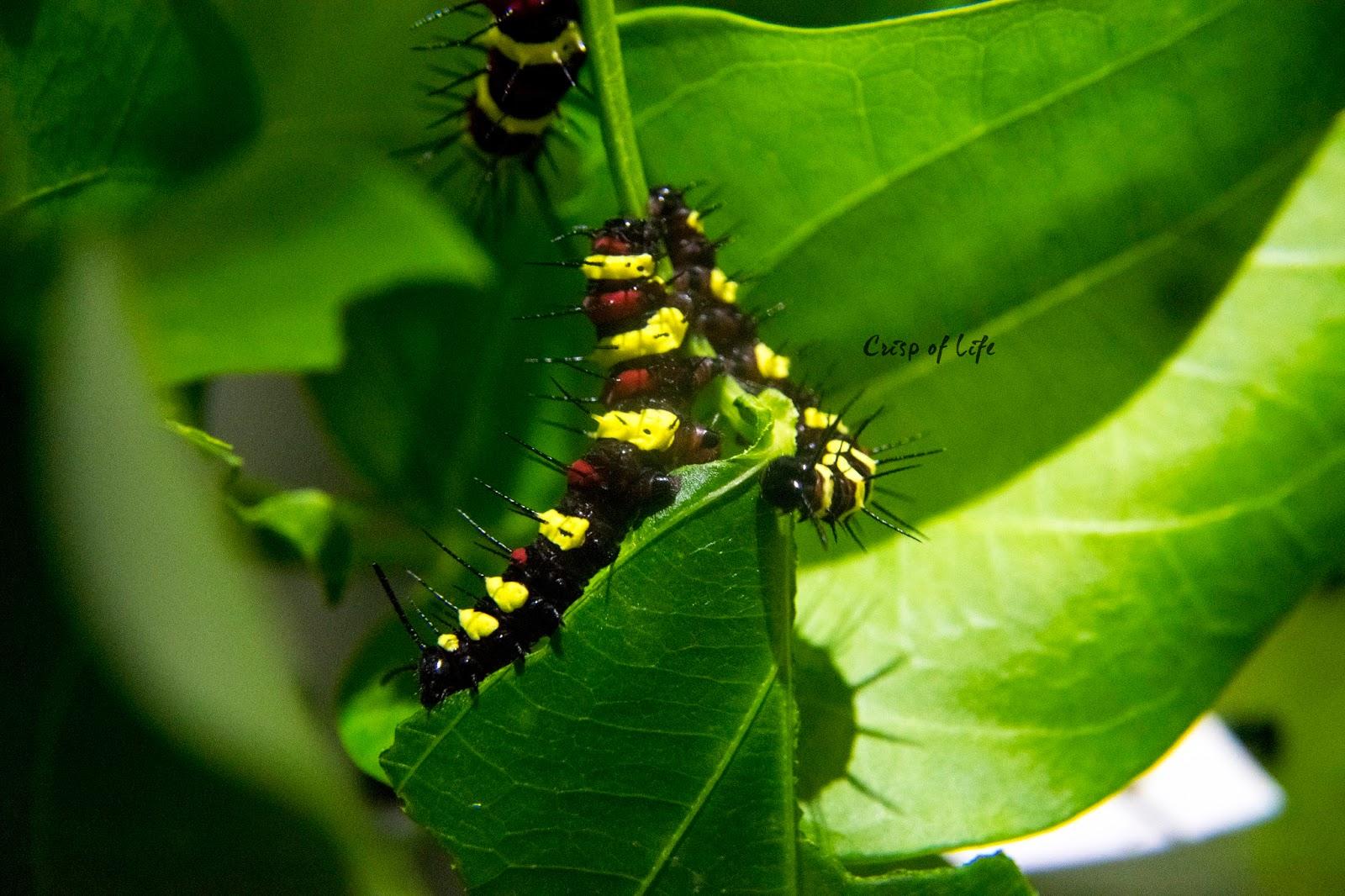 Discover the Tropical's Denizens in Entopia @ Teluk Pahang, Penang