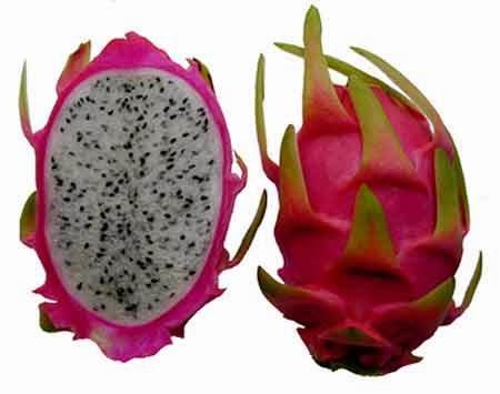 Pada awalnya saya mengira buah yakni buah orisinil dari daratan cina Manfaat Buah Naga Merah dan Putih untuk Kesehatan