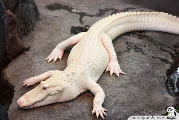 23 wonderful albino animal pictures amazing creatures. Black Bedroom Furniture Sets. Home Design Ideas