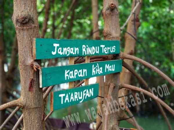 Ekowisata Mangrove Sungai Rindu Hidupkan Ekonomi Warga Sembilangan
