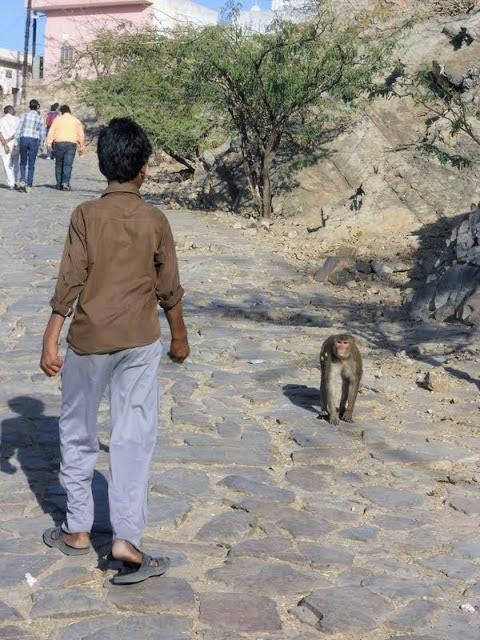 Things to do in Jaipur: Hike to Jaipur's Monkey Temple