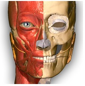 Anatomy Learning logo picture