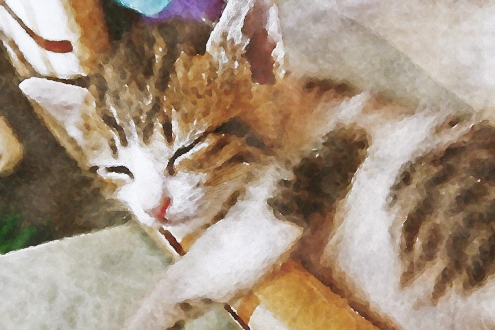 水彩画の子猫