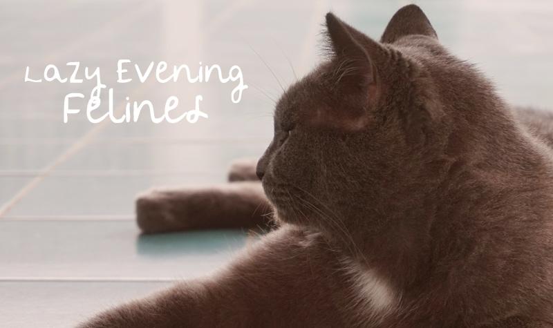Lazy Evening Felines