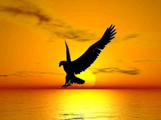 Mơ thấy cưỡi chim đại bàng