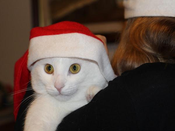 Feliz Natal + Fotos com o Kenzo