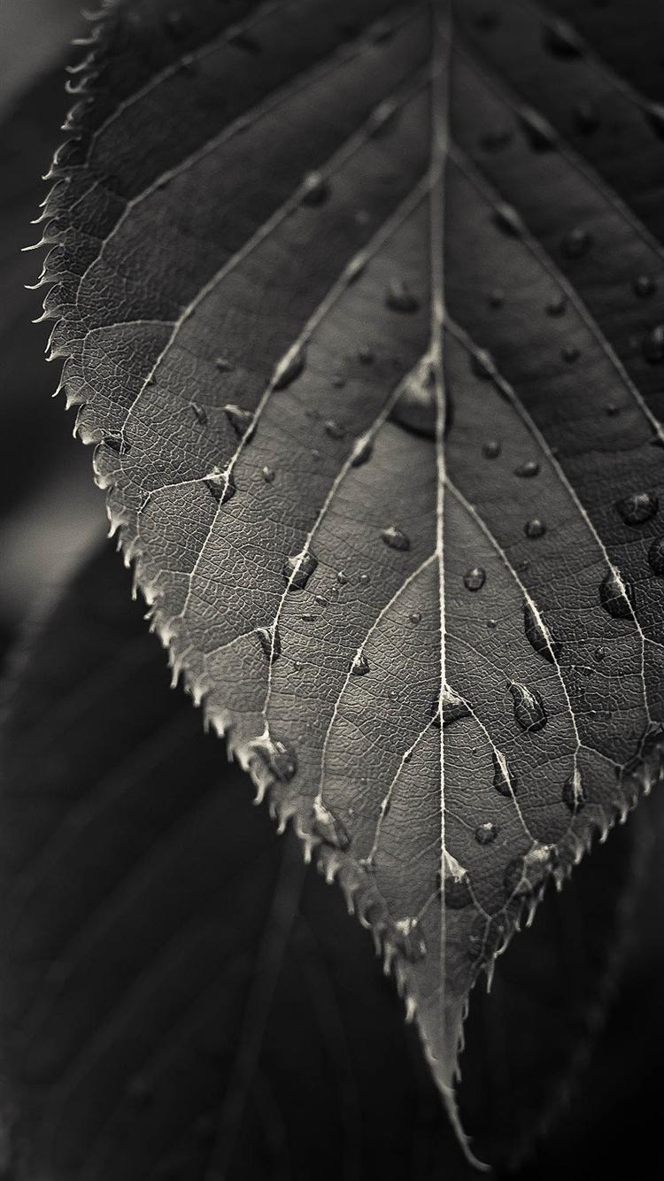 Leaf Macro Wallpaper IPhone 6