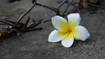 श्रावणसण - मराठी कविता | Shravansan - Marathi Kavita